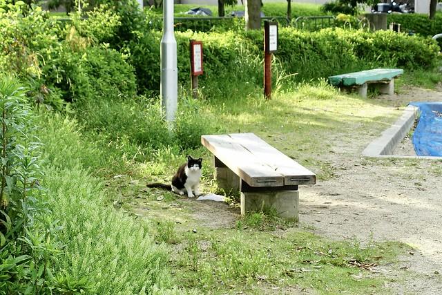 Today's Cat@2021−05−16
