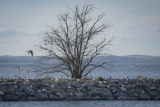 Seagull World