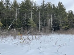 Snow over the frozen beaver pond