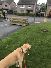 Latest waste of space for people nonsense taking street cluttering to the extreme by plonking a planter down on the road right after the junction. Accident waiting to happen at Bonaly Brae!