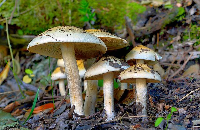 Forest floor fungi.