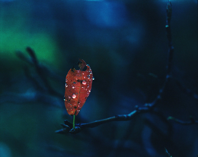 Pentax 67 II: Fuji Velvia Leaf - The Last One