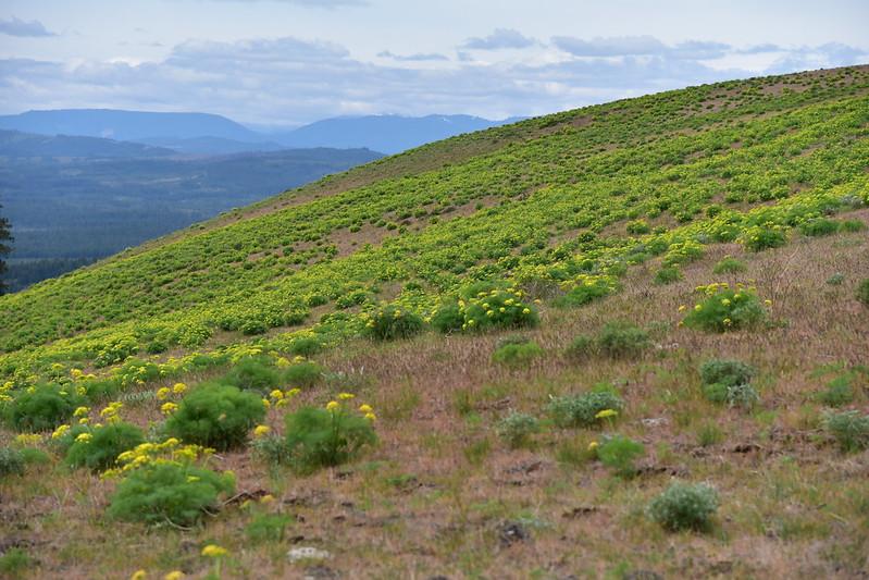 Grayback Mountain Hike