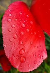 'Recent Rain'