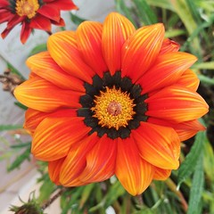 De mi casa.ud83cudf38ud83cudf38 #flors #flores #flowers #natura #naturaleza #nature #ig_flors #shin_flors #shin_flowers #ig_flores #ig_nature #ig_flowers #flower_igers #flowersgram #flowerslover #gardenflowers #floweroftheday #flowersoftheworl