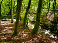 Late spring walk in Plas Power Woods, Nant Mill, Wrexham