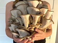 Iu2019ve been growing mushrooms