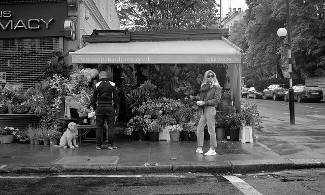 Flower Shop, Elgin Crescent