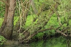 So Spring Green, Loddon