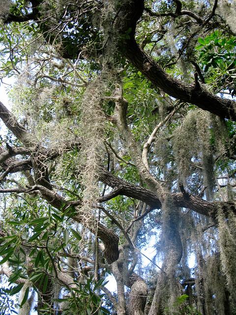 National Love a Tree Week IMG_1688 017_2