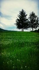 Paesaggio bucolico