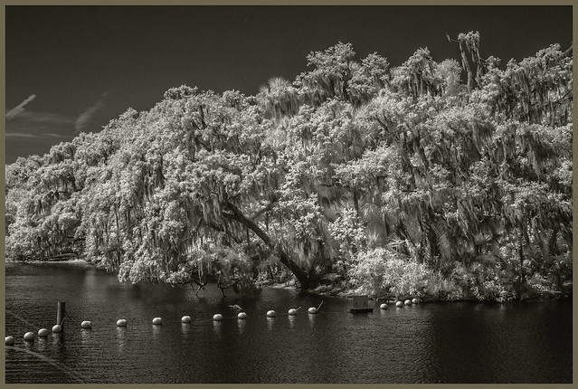 St Johns River IR #2 2021; The St Johns Meets Blue Springs