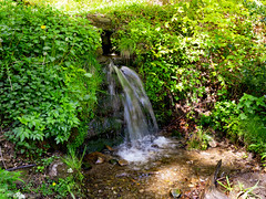 Late spring walk in Plas Power Woods, Nant Mill, Wrexham