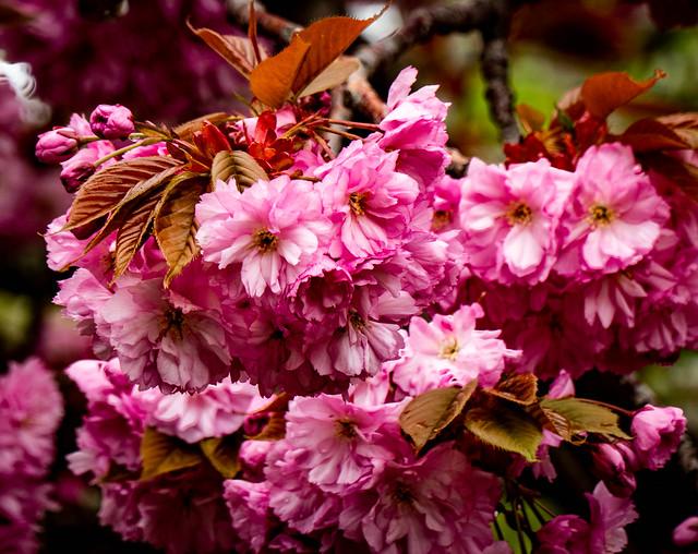 Plenty of flowers