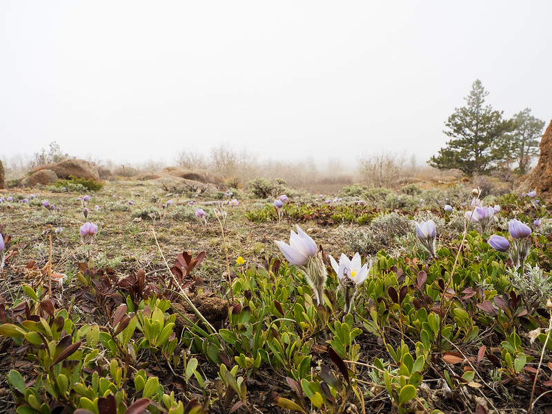 Early bloom on a foggy morning