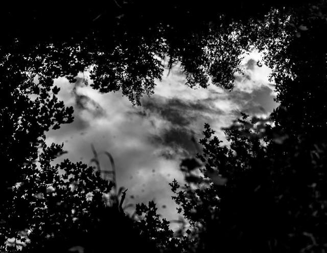 2021-05-16 - Dimanche - 136/365 - Les miroirs dans la boue - (William Sheller)