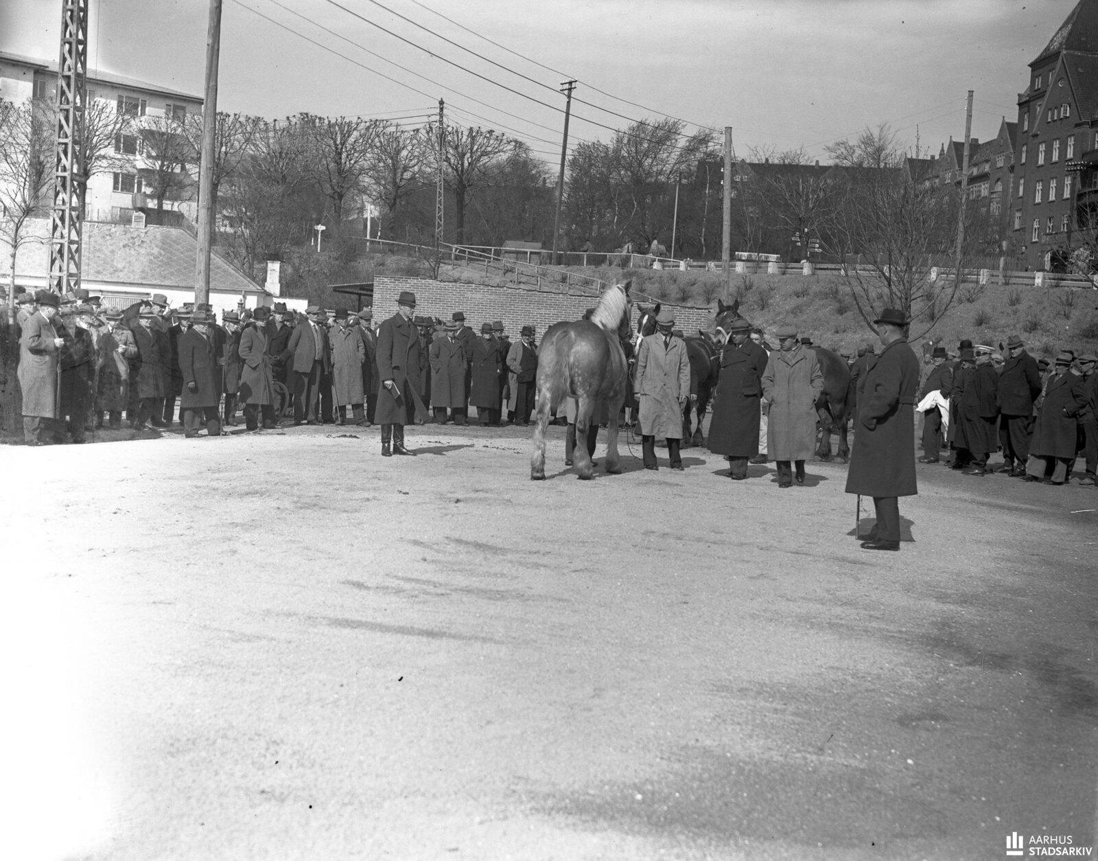 1940. Немцы приобретают лошадей в южной гавани. Германская комиссия по закупкам собрала 120 лошадей, из которых 73 были куплены. 29.04.