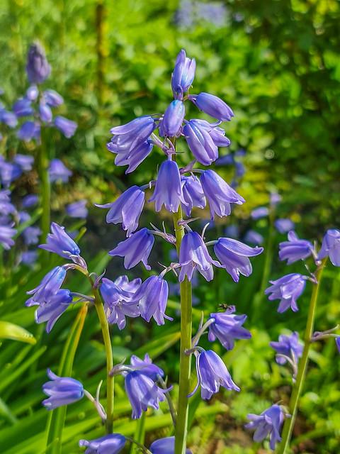 In my garden today