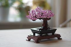My #LEGOBonsai is blooming 🌸 #spring #lego #PentaxKP #85mm