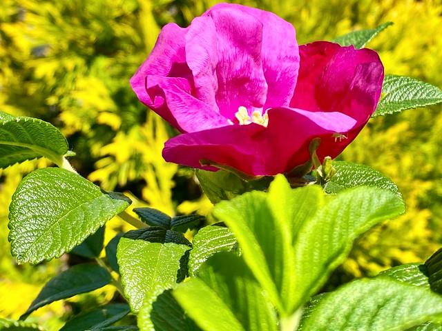 Random Photos! - La vie en Rose!