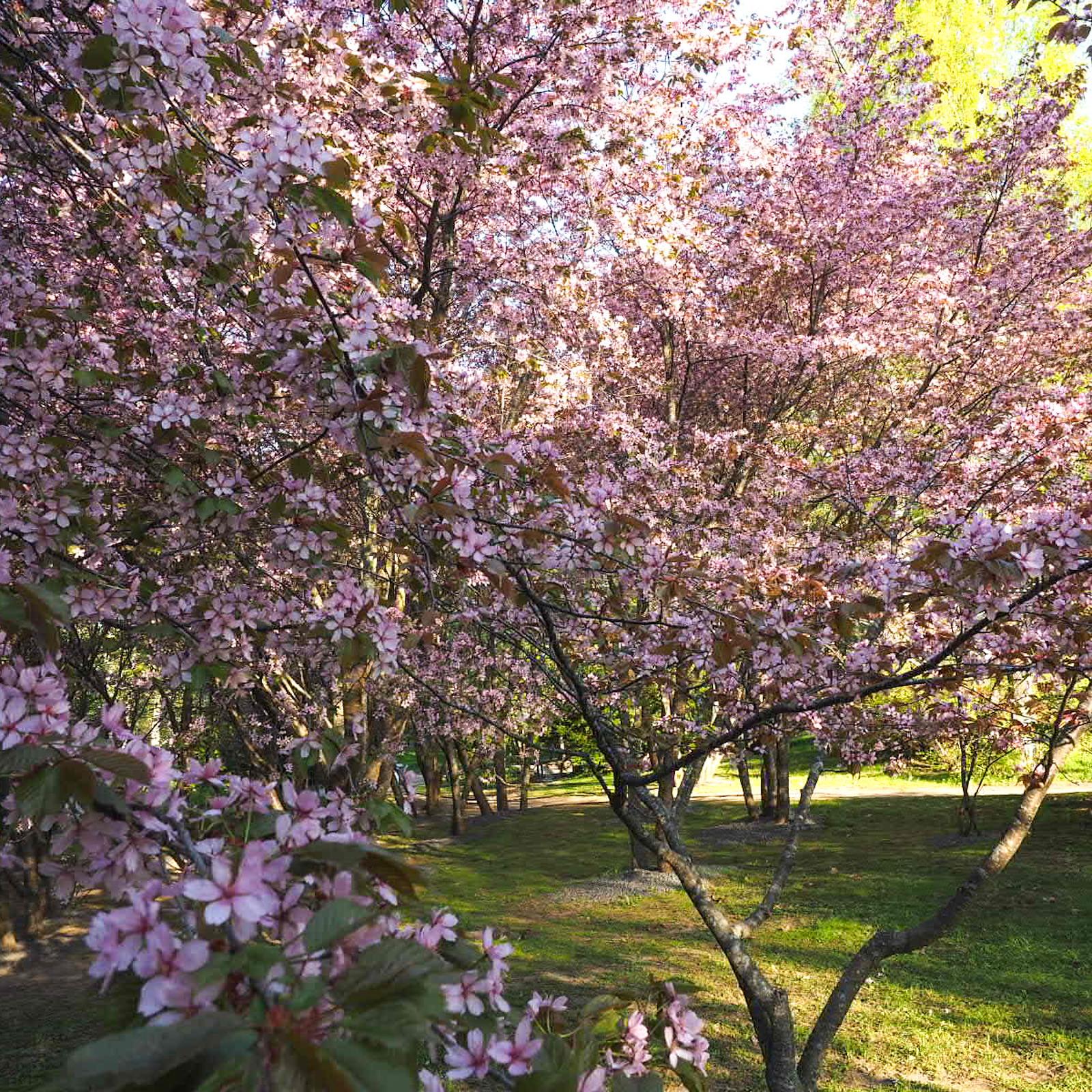 Roihuvuoren japanilaistyylinen puutarha