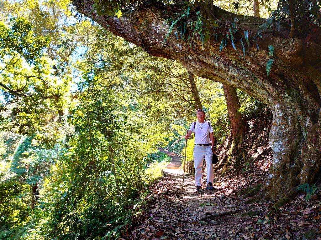 秋海棠步道上-藤枝國家森林遊樂區-高雄市桃源區寶山里-Begonia trail, Tengzhi National forest recreation area, Taoyuan, Kaohsiung City, Taiwan