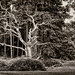 35.Tree survey in progress