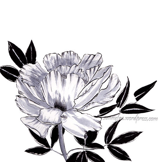 peony drawn with ink