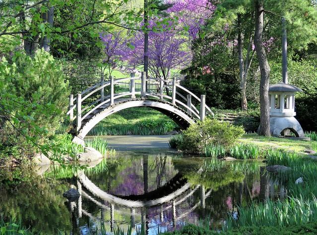 In the Fabyan Japanese Garden