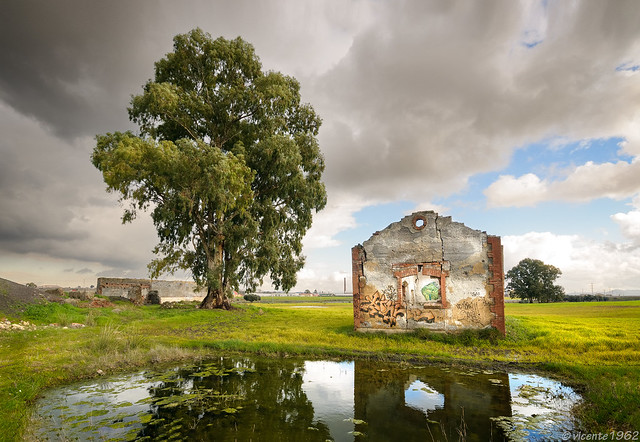 Casa abandonada y eucalipto