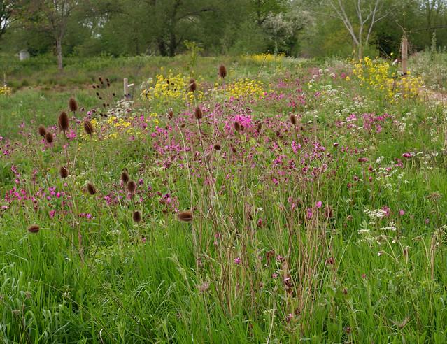 Wildflowers, Perivale Park