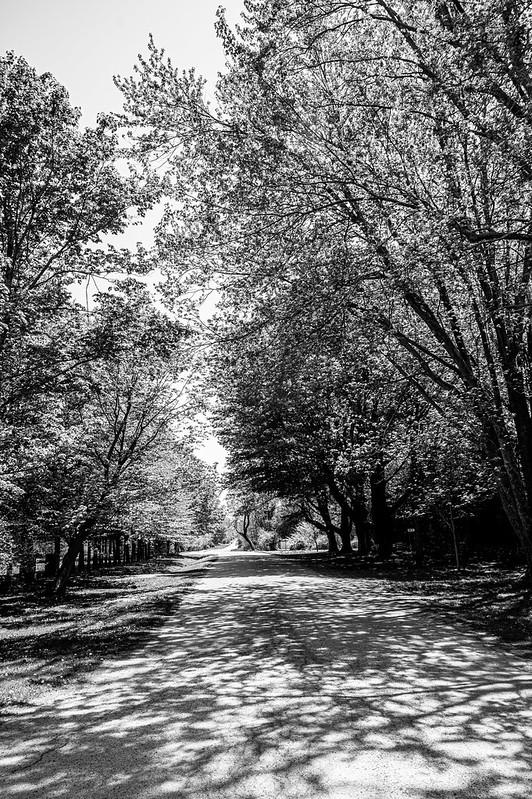 Spring - light & shade on Tuyll Street