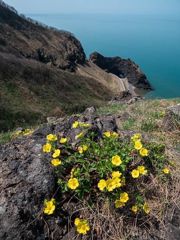 灯台コースの花