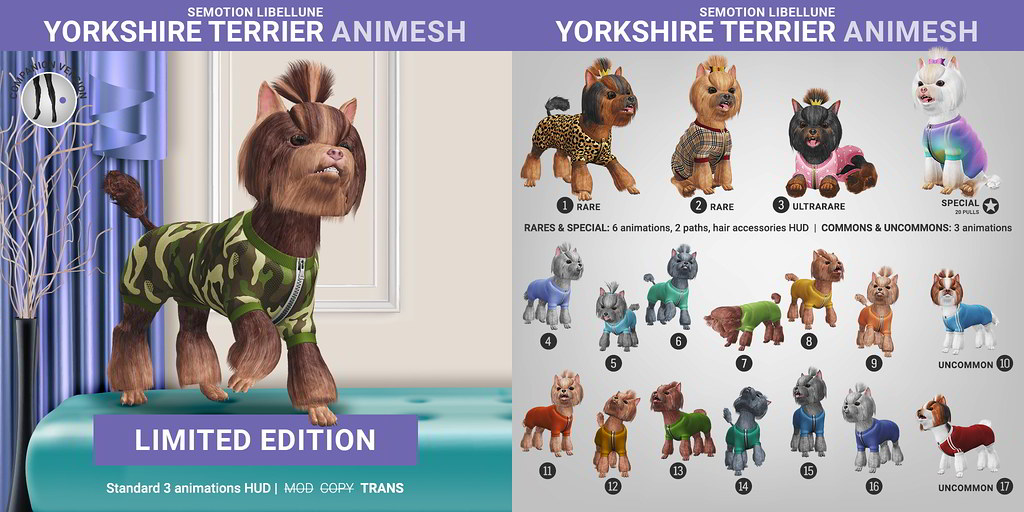 SEmotion Libellune Yorkshire Terrier Animesh
