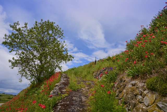Hiking in the Kaiserstuhl region