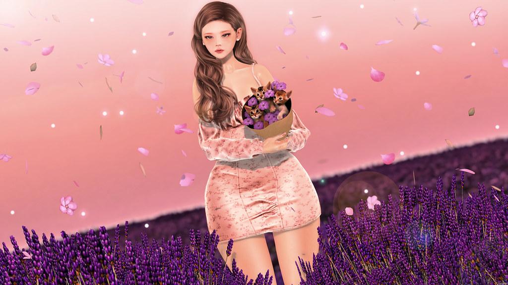 Lavender Fields ♥