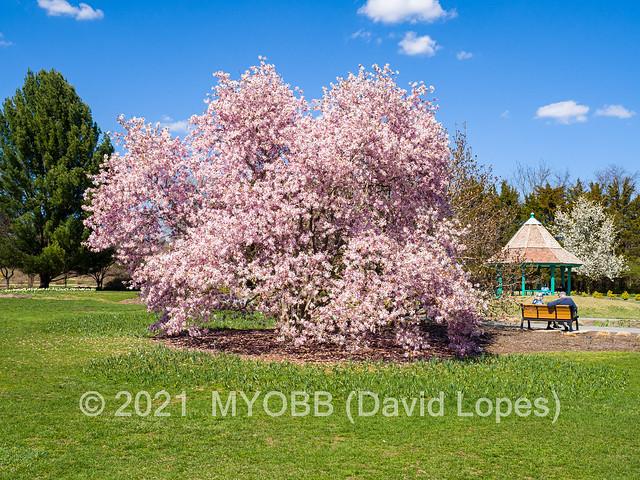 Colonial Park 2021-4080074