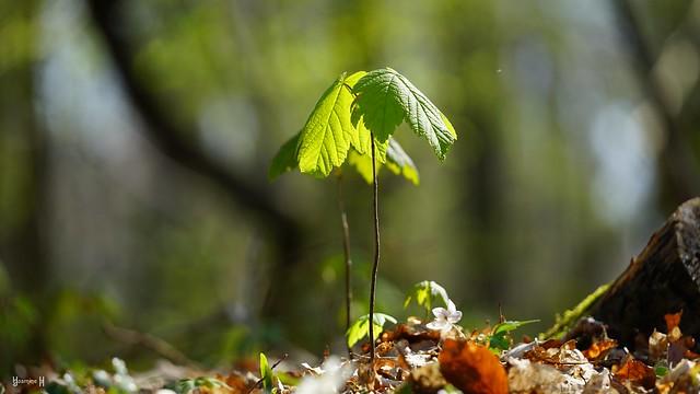 9750 - Nature