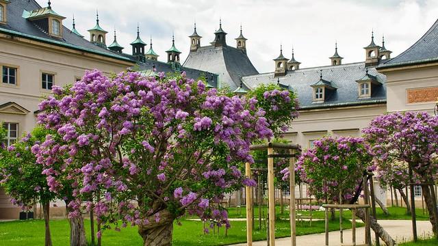 Frühling im Schlosspark Pillnitz
