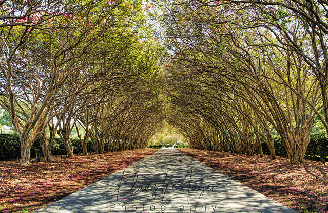 A Hall Of Trees