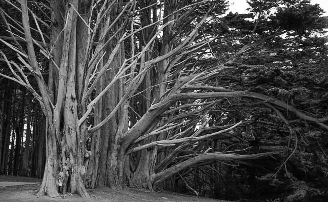 Cypress line