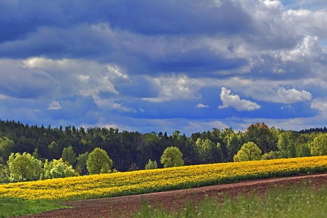 Lindauer Moor 150521-32 a