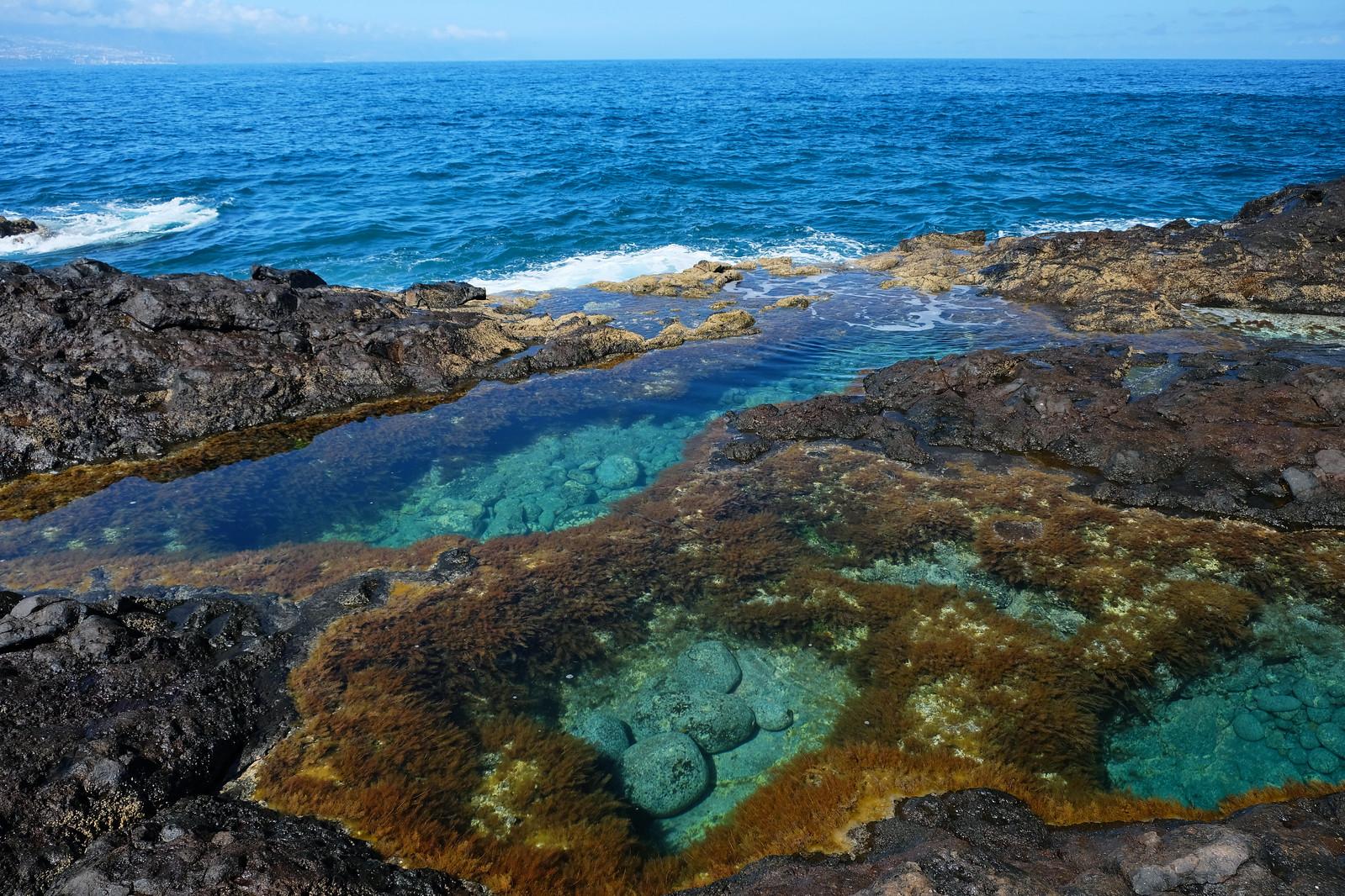 Mesa del Mar, Tenerife, Canary Islands, Spain