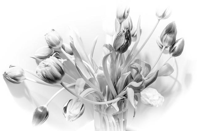 Tulips (again)