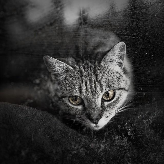Curious Longing