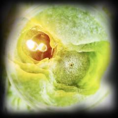 Green Lanterns Light.....
