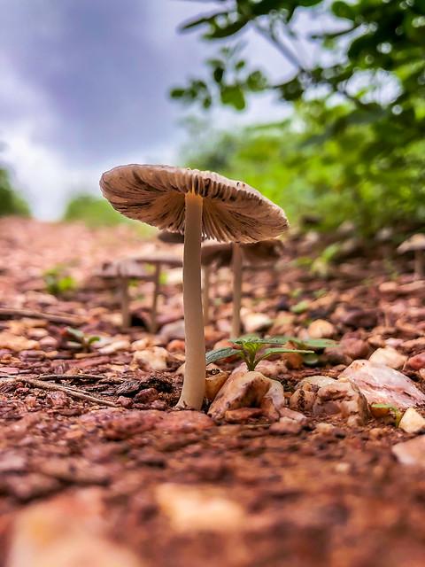 The Mushroom / O Cogumelo