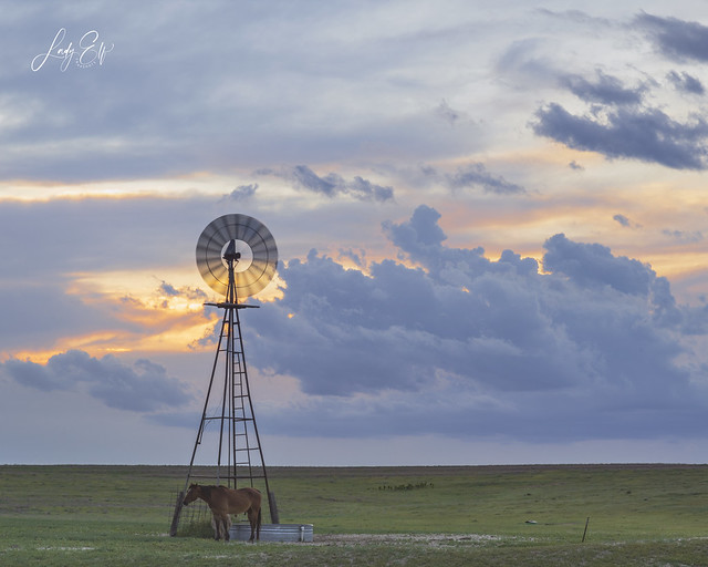 Windmill and Horse Sunset