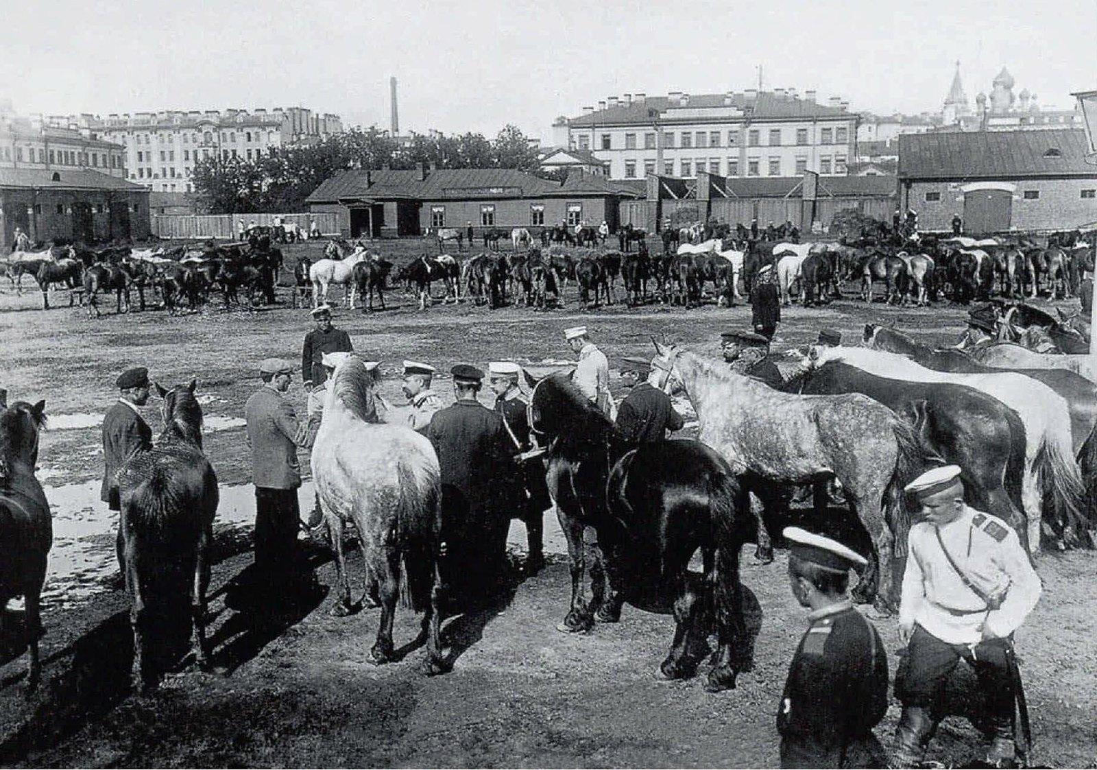 1914. Отбор лошадей для армии