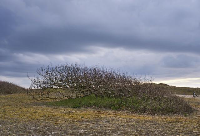 Landscape De Manteling Domburg